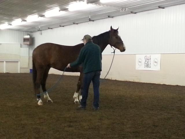 Ground work, desensitizing the horse